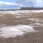 Wheat School: Why it Pays to Wait on Spring Tillage