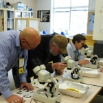 CanoLAB microscopes and insect pests