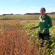 Soybean School: Assessing the Impact of Frost