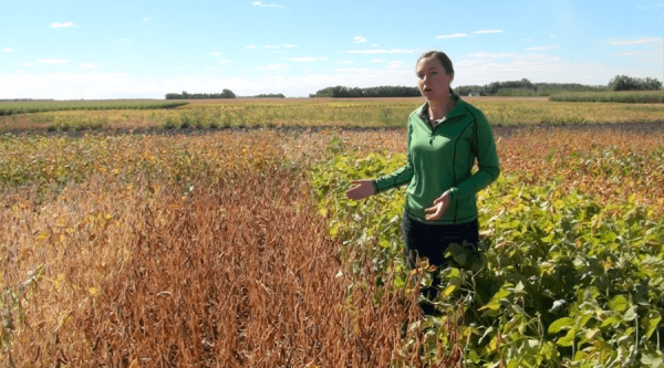 MPGA's Kristen Podolsky discusses soybean maturity and frost risk.