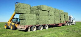 Selling hay to the UAE: Challenges and Opportunities