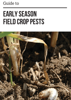 Guide to Early Season Field Crop Pests