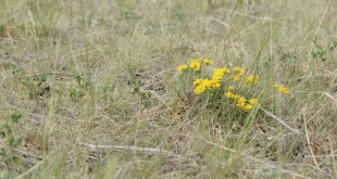 prairie in drought